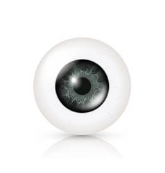 eye realistic of 3d human vector image