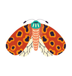 Colorful hand drawn moth on white background vector