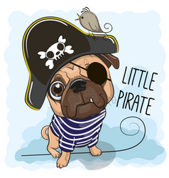 Cute pug dog in a pirate hat vector