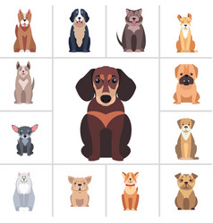 Dachshund and other dog breeds set vector