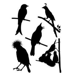 detail birds silhouette vector image