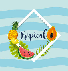 frame design with tropical fruit background vector image