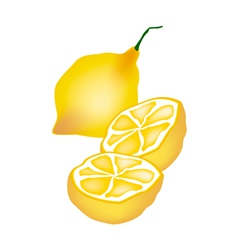 Fresh Lemon and Half on White Background vector