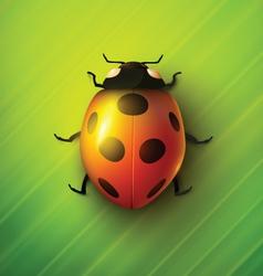 Realistic ladybug vector