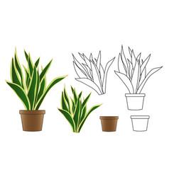 Snake plant in flowerpot isolated on white vector