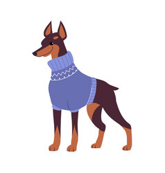 cute doberman dog in warm winter sweater symbol vector image