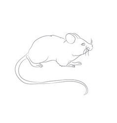 mouse stands drawing by lines vector image
