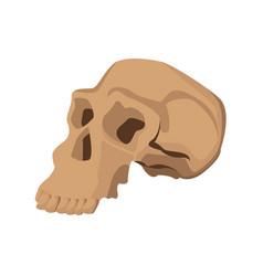 skull human structure anatomy bone icon vector image