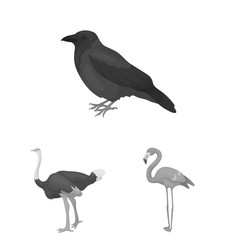 types of birds monochrome icons in set collection vector image