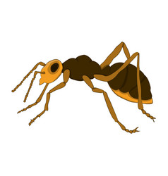 Cartoon ant on a white background vector