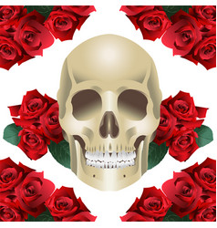 human skull modern style and roses vector image