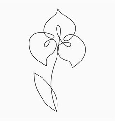iris one line drawing continuous line flower vector image