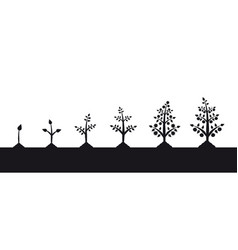 plant growth stages silhouette on white background vector image