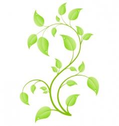 young sapling vector image