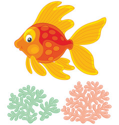 Cute gold fish with a good-humored smile vector