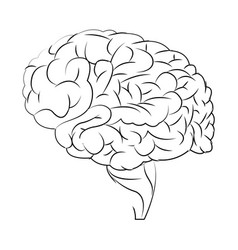 Human brain organ think health vector