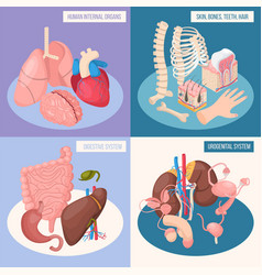 human organs 2x2 design concept vector image