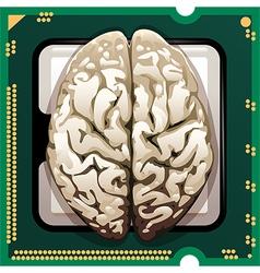 Brains inside vector image