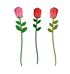 Set of three roses of different colors on a white vector image vector image
