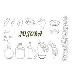 black and white set of hand drawn jojoba vector image
