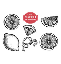 Collection hand drawn citrus vector