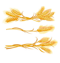 Ears of wheat set vector