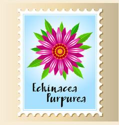 Echinacea purpurea flower on a postage vector