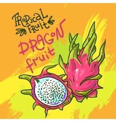 Hand drwan fruit vector