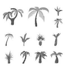 isolated object jungle and botanical symbol vector image