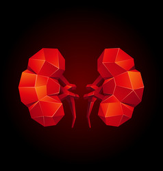 Red low poly human kidneys on a black background vector