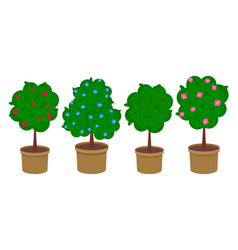 Set potted flowering trees or rose bushes vector