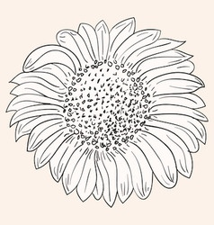 Sunflower Drawing vector image vector image
