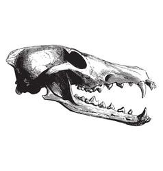Bear skull vintage vector