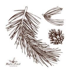 vintage pine tree vector image