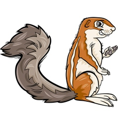 xerus animal cartoon vector image vector image