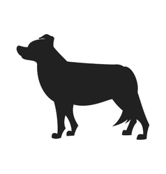 Border collie black silhouette vector