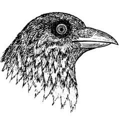crow - ink graphic artwork vector image