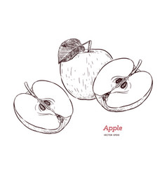 fresh apple hand drawn sketch style eco food vector image