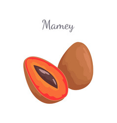 Mamey exotic juicy fruit whole and cut icon vector