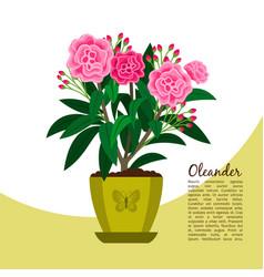 oleander plant in pot banner vector image