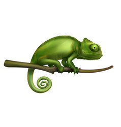 Chameleon realistic image vector