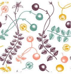 hand drawn cranberry background in color wild vector image