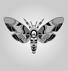 Moth acherontia atropos black and white drawing vector