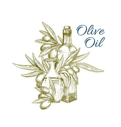 Olive oil and branch with fruits isolated sketch vector
