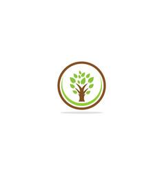 tree botany eco logo vector image