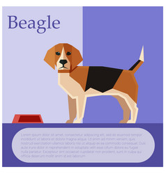 Beagle colourful postcard vector