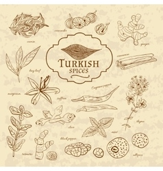Set of spices and herbs cuisines Turkey on old vector image vector image