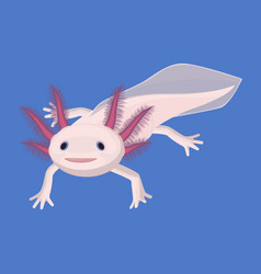 axolotl pink isolated with four legs on white vector image