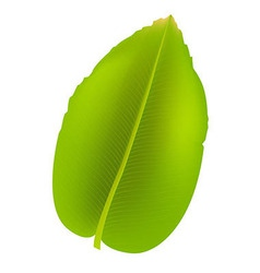 Banana Leaf vector image