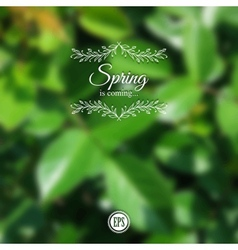 Blurred spring background with branch and green vector image